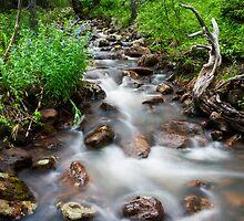 Leona Creek by Kim Barton