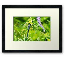 Slaty Skimmer Dragonfly Framed Print