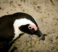 Mr Penguin by lukescott