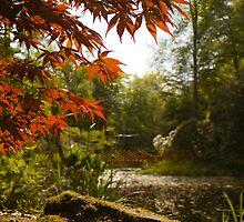 Pond Scene by lukescott