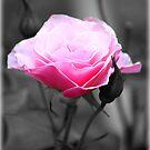 I Remember... by Carrie Bonham