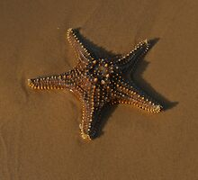 Starfish by Margaret  Hyde