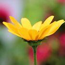 Wildflower Garden by Carrie Bonham