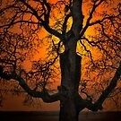 The Glow and Old Oak by Charles &amp; Patricia   Harkins ~ Picture Oregon