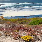 Tietiesbaai, a place like Eden 3 by filiola