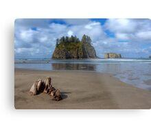 Cypress in the Sand (La Push, Washington) Metal Print
