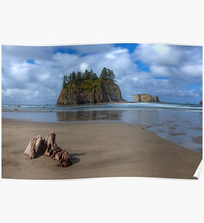 Cypress in the Sand (La Push, Washington) Poster