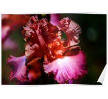 Dark Iris Fractalius Poster