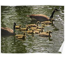 """""""Canada Geese Family"""" 3 Poster"""