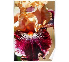 Golden Iris Fractalius Poster