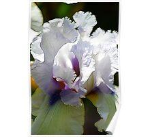 White Iris Fractalius Poster