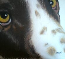Two spaniel eyes by Sharon Herbert