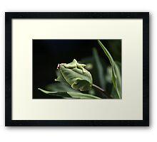 Parrot Tulip Bud Framed Print