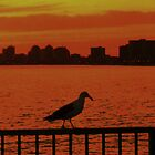 Seagull Enjoying  Sunset on the Pier by StephenPLee