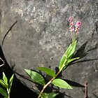 Flower and rock by filiola