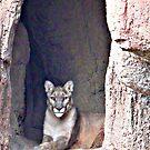 Majestic Puma © by jansnow