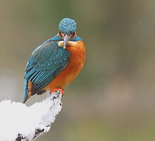 Kingfisher In The Snow by Aaron Gee