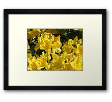 Yellow Rhodies art Colorful Rhododendrons Flowers Framed Print
