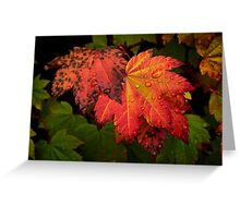 Red Vine Maple Leaves Greeting Card