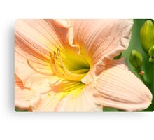 Softest Peach Canvas Print