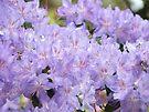 Rhododendron Flowers Purple Lavender Rhodies art by BasleeArtPrints