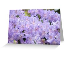 Rhododendron Flowers Purple Lavender Rhodies art Greeting Card