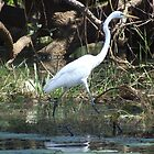Great Egret 2 by LydiaJayne