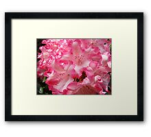 Summer Rhododendron Flowers Pink White art prints Framed Print