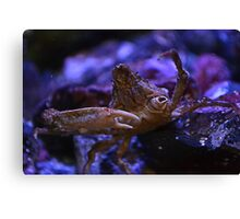 Mr. Crabs Canvas Print