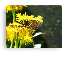 Excuse me but can't a Butterfly get a little privacy? Metal Print