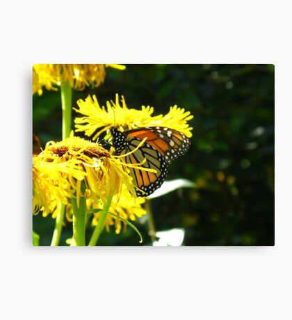 Excuse me but can't a Butterfly get a little privacy? Canvas Print