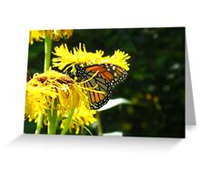 Excuse me but can't a Butterfly get a little privacy? Greeting Card