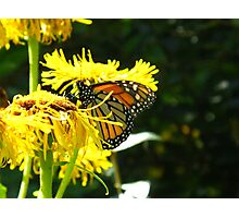 Excuse me but can't a Butterfly get a little privacy? Photographic Print