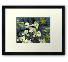 White Dogwood Flowers Tree art print Blue Sky Framed Print