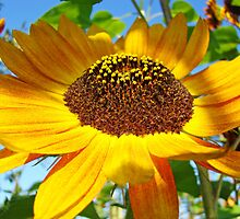Orange Sunflower Floral art prints Garden Baslee Troutman by BasleeArtPrints