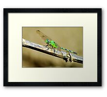 River Dragon - Brazil Framed Print