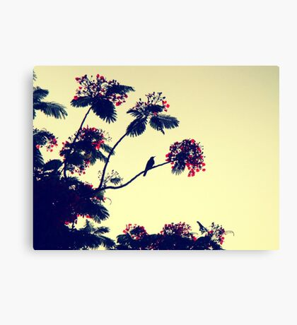 Bird heaven - St. Maarten Canvas Print