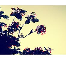 Bird heaven - St. Maarten Photographic Print
