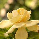 Gardenia  by DearMsWildOne