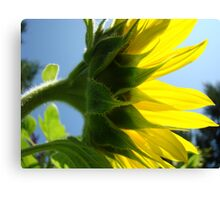Sunlit Sunflower Flower art prints Yellow Sunflowers Floral Canvas Print