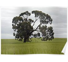 Wonderful trees 1 Poster