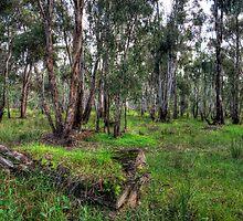 Aussie Bush by Leigh Monk