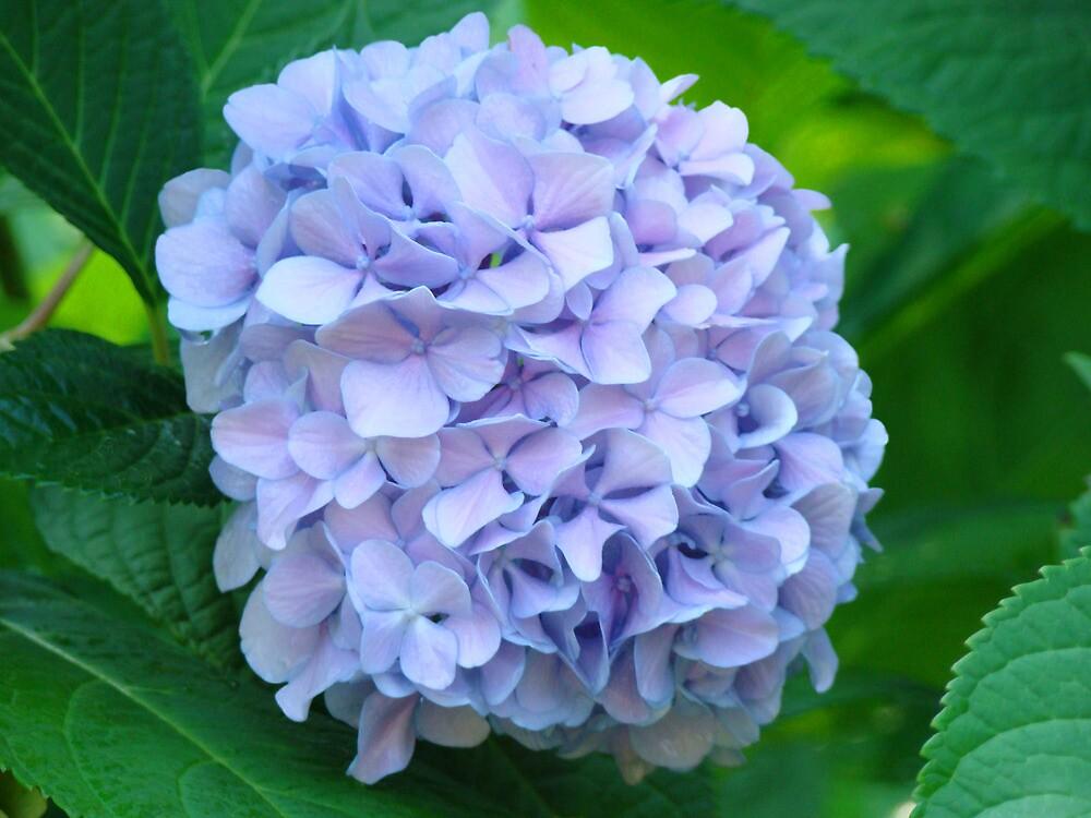 Blue Hydrangea Flowers Bouquet Garden Floral Baslee by BasleeArtPrints