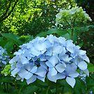 Hydrangea Flowers art prints Blue Hydrangeas Floral Baslee by BasleeArtPrints