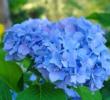 Blue Hydrangea Flower Garden art prints Floral Garden by BasleeArtPrints