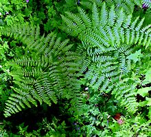 Summer Ferns in the Forest by Elaine Bawden