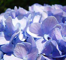 Blue Hydrangea Flower Blooming Floral art prints Baslee by BasleeArtPrints