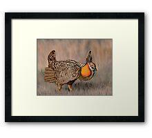 Prairie Chicken Framed Print