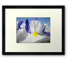 White Iris Flower Macro Close-up Blue Sky White Clouds Framed Print