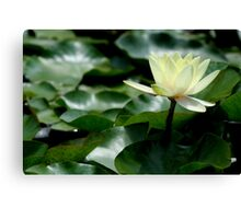Yellow Beauty Standing Out Canvas Print